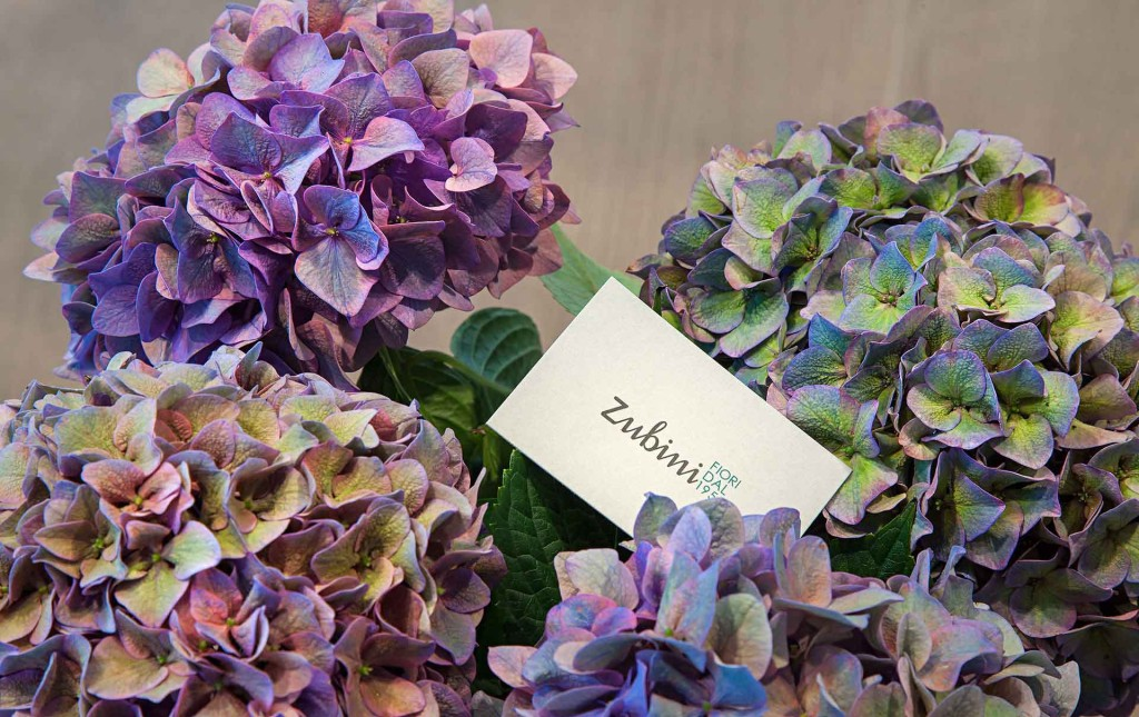 Fiori recisi linguaggio dei fiori zubini for I fiori della balsamina