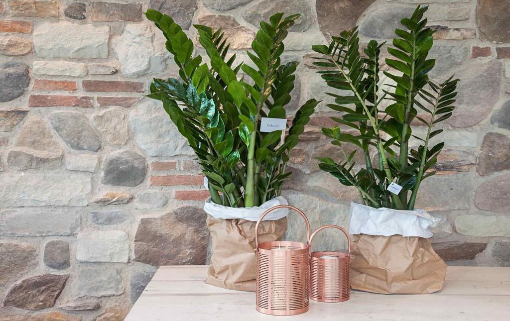 Piante verdi piante da interni casa verde zubini - Piante verdi interno ...