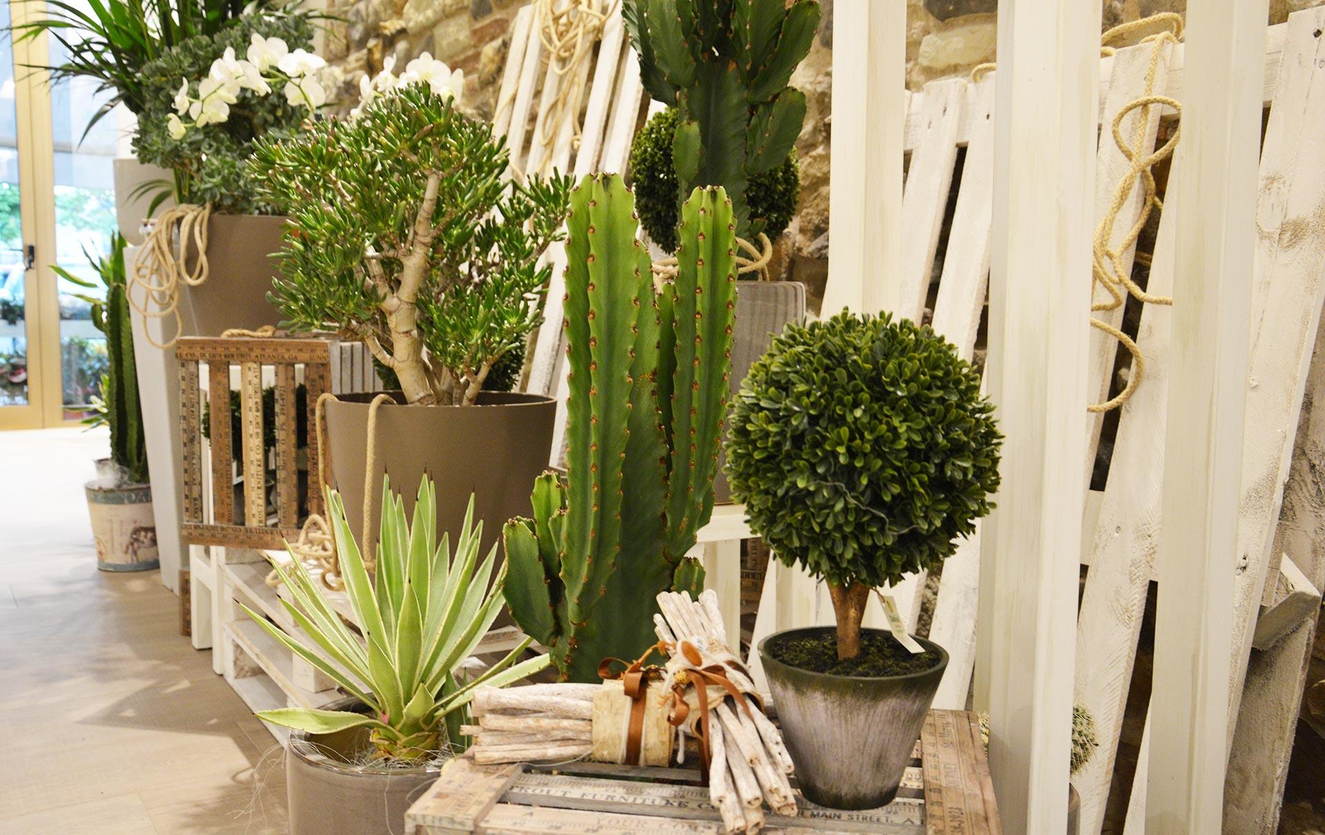 piante verdi e grasse