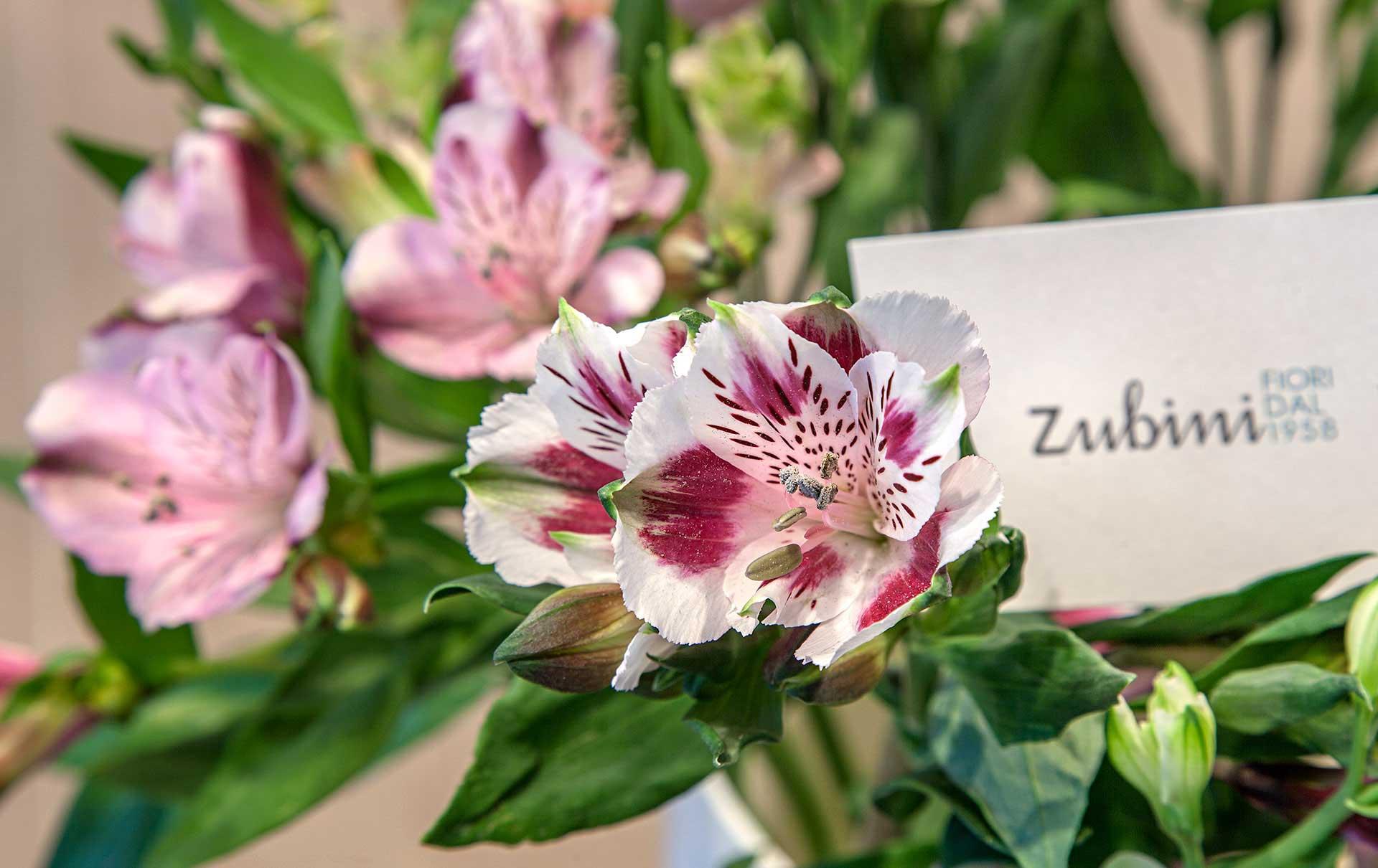 Fiori recisi zubini for I fiori della balsamina