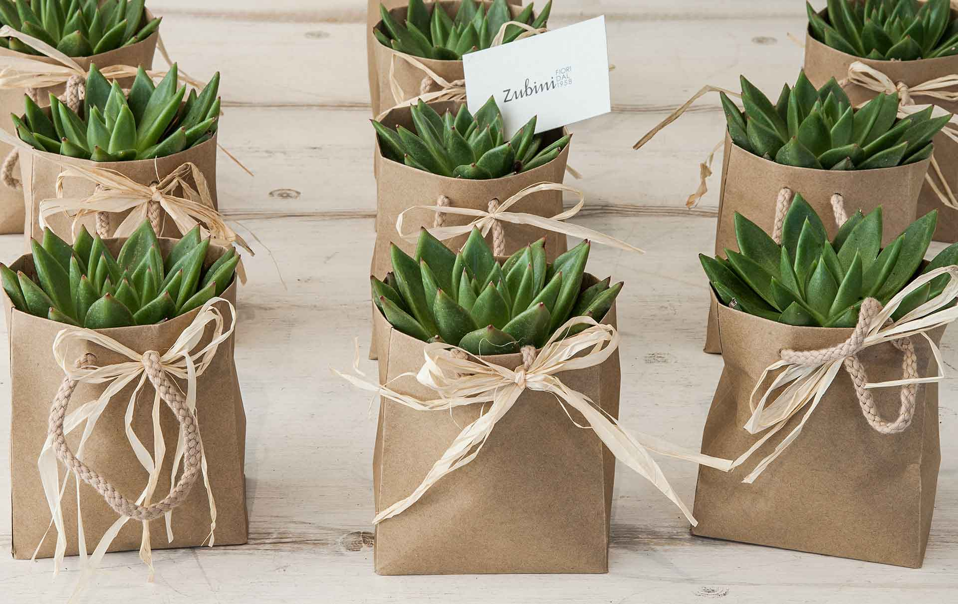Piante grasse zubini for Vasi piante grasse